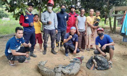 Tim Rescue DPKP Berhasil Keluarkan Buaya Dari Kolam Warga