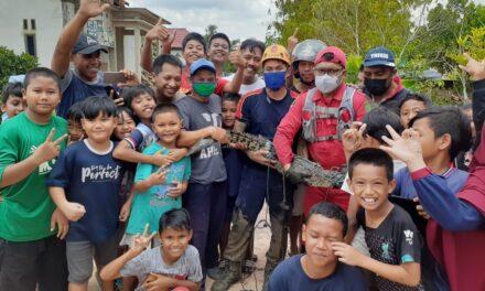 Buaya Masuk ke Kolam Warga, Tim Rescue DPKP Kutim Berhasil Mengevakuasi