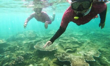 Destinasi Ekowisata Pantai Alien Menyimpan Pesona Bawah Laut Luar Biasa