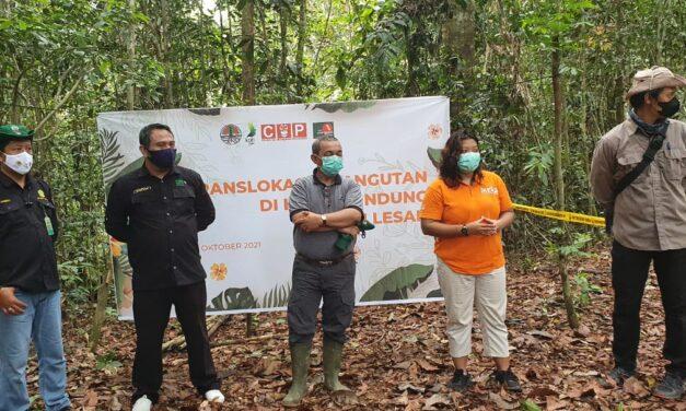 Chiko, Si Orangutan di Lepasliarkan Oleh BKSDA-KPC-COP ke Hutan Lindung Sungai Lesan
